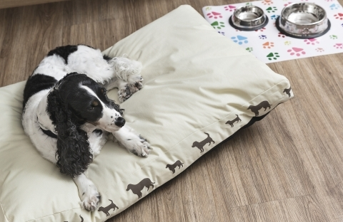 Hotel Pet Firendly 4 stelle a Pordenone